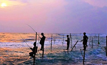 Stilt fishing in Galle